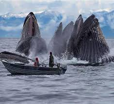 stop loss oversize like fishing a whale